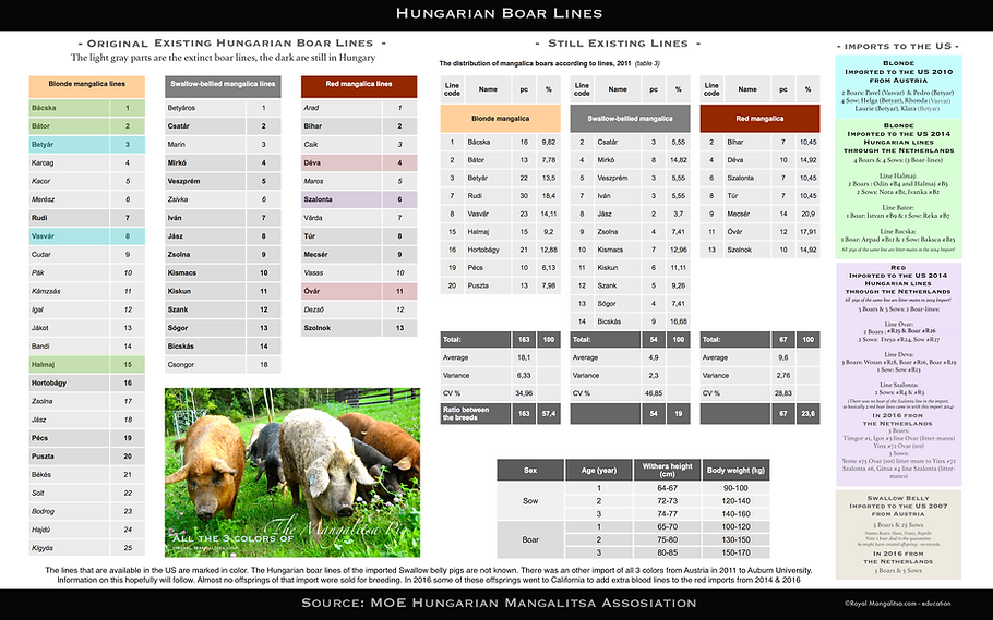 All Hungarian boar lines - MOE - USA Imp