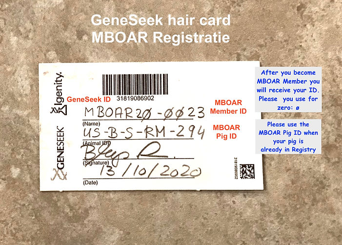 GeneSeek Hair Card 1- MBOAR ID_text.jpg