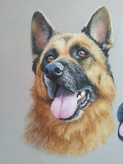 Paint Your Pet 16 - 19 June 10am-4pm. Sue Gasser