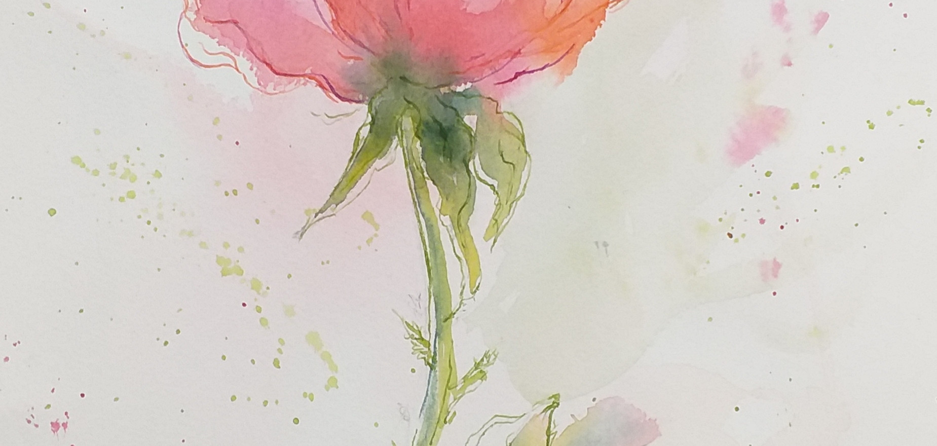 The Beauty of a Rose by Margaret Ng
