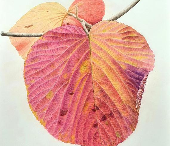 Autumn Colours by Kerrie Lander