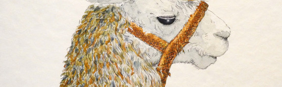 Sasa's Alpaca by Jo Barrett