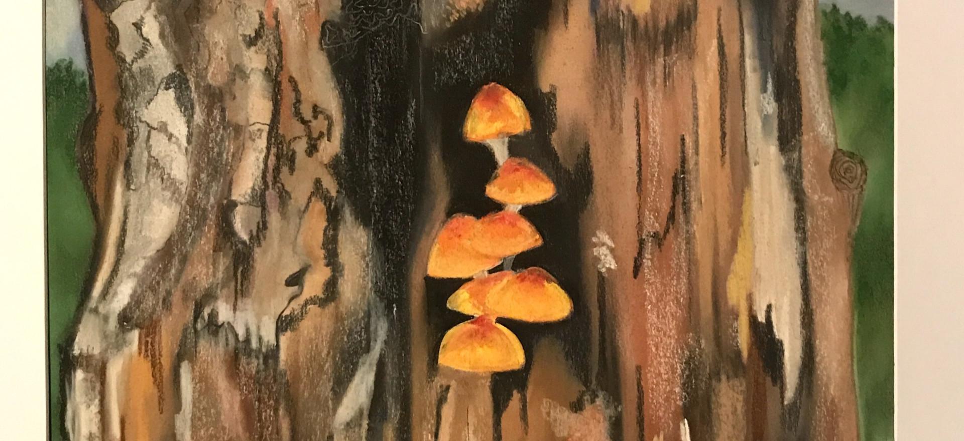 Tree bark by Dianne Grey