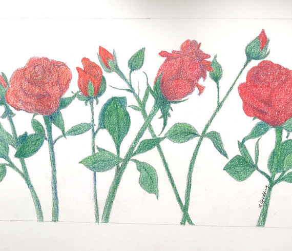 Roses are  Red by Susan Spedding