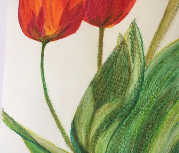 Tulips by Beth Taylor