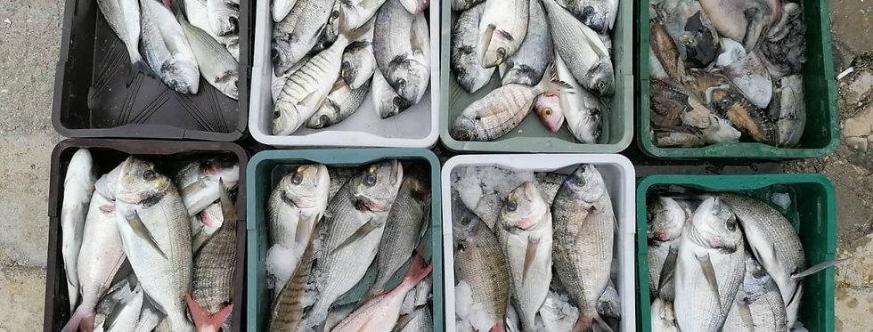 Riba II klasa Orada, Pic, Sarag