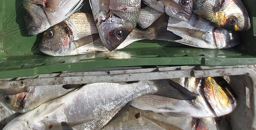 Riba I klasa Orada, Pic, Sarag, Arbun