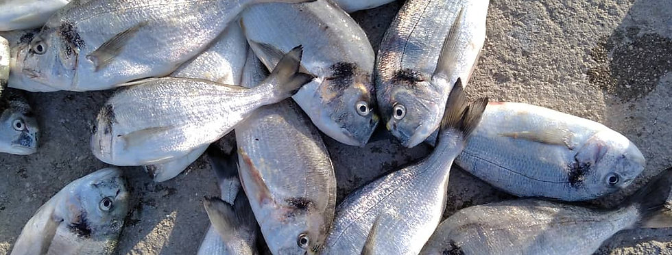 Riba I klasa Orada očišćena