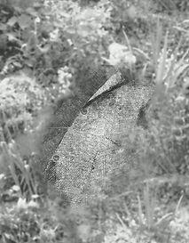 buried bobice
