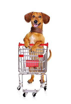 dachshund-dog-standing-next-to-the-shopp