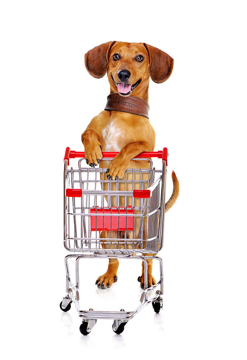 dachshund-dog-standing-next-to-the-shopp