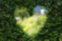 pexels-photo-255441.jpeg