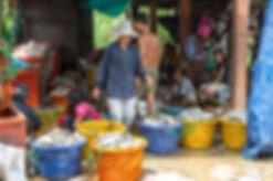 シェムリアップ 魚 siemreap カンボジア cambodia