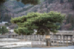 京都 KYOTO 嵐山 渡月橋 arashi yama