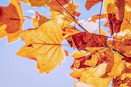 autumn-3763897_640.jpg
