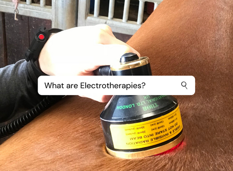 What are the Electrotherapies used by Veterinary Physiotherapists for?