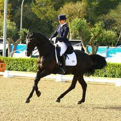 Moosbends Ricardos competing at CDI Barcelona 2014