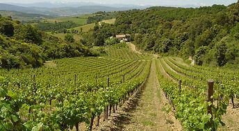 Regional vineyards view