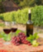 Dégustation de vins dans un domain viticole