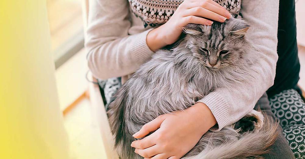Cuidados com a saúde do seu pet no inverno