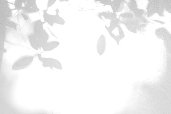 Leaves Shadow_edited.jpg