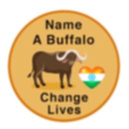 buffalo KOD.jpg