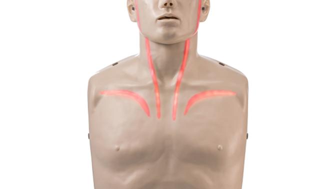 Brayden Pulse CPR Manikin