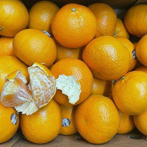 Honey Tangerine 1ea