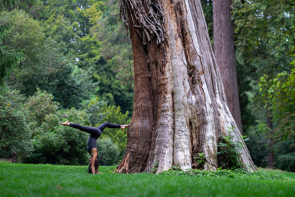 dance, old growth forest, photography, nina maria photography