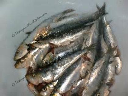 """Portuguese Small Sardines """"Petingas"""""""