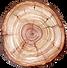 tree stump overhead