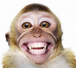 funny-laughing-monkey-picture