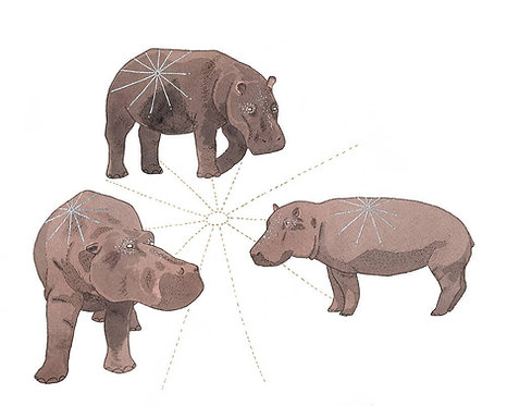 Equals - Hippo Print