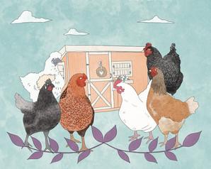 chickens_web.jpg
