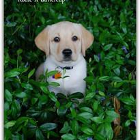 Penny-Kodie Buttercup 3.jpg