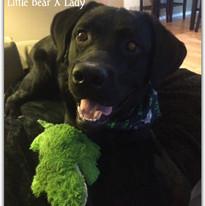 Cooper Bear XLady.jpg