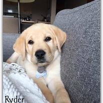 Ryder-Kodie Cinda.png