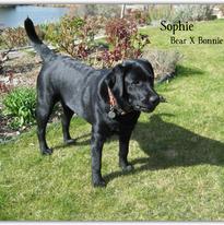 Sophie- Bear X Bonnie.png