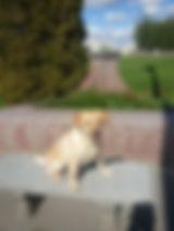 Taffy Outside.jpg