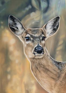 mom oh deer-7542