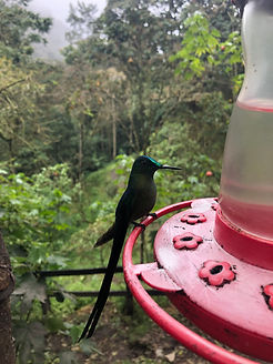 a Hummingbird at the Acaime Hummingbird House on the Cocora Valley trek in Salento Colombia