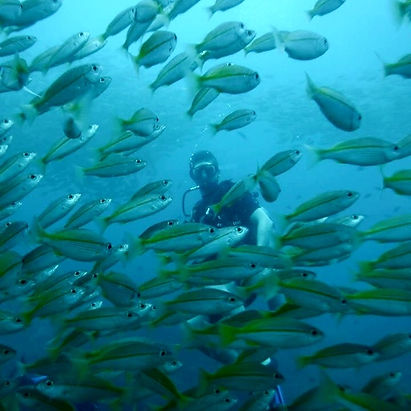 Anxious & Abroad scuba diving off Thailands coast in Koh Phi Phi with fish