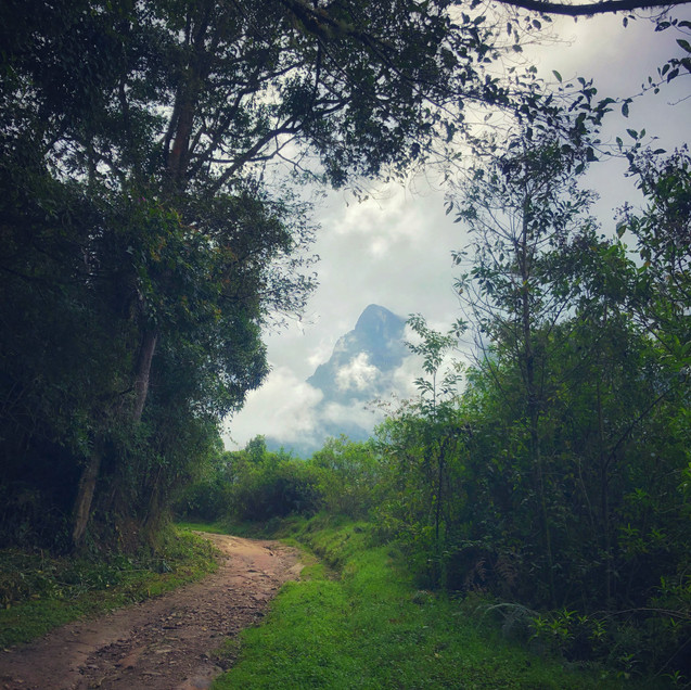 a well-framed photo of a mountain through the trees in Salento, Colombia
