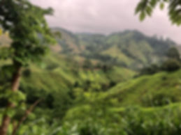 view of the hills on the Lost City Trek or Cuidad Perdida Hike in Santa Marta Colombia
