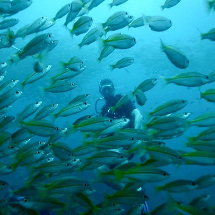 Anxious & Abroad scuba diving in the coral reefs near Koh Phi Phi, Thailand with fish