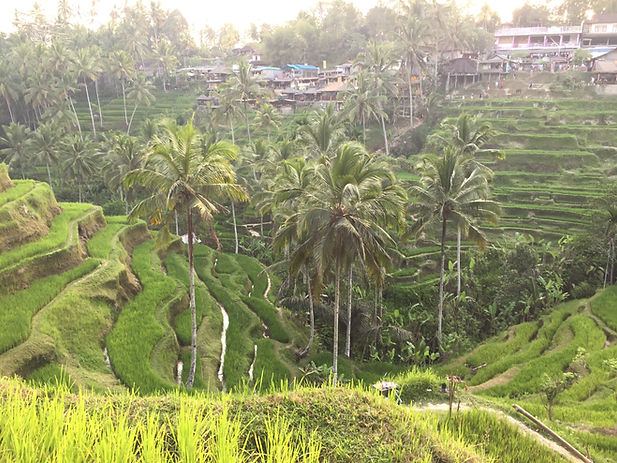 Tegallalang Rice Terrace in Ubud, Bali, Indonesia