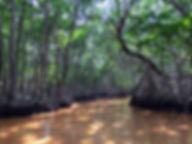 mangrove in Celestun on Mexico's Yucatan Peninsula