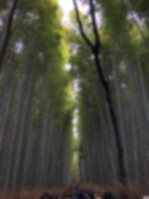Arashiyama Bamboo Forest & Grove in Kyoto Japan