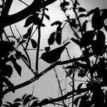 Moonlit Rendevous