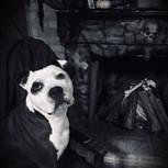 Gothic Puppy
